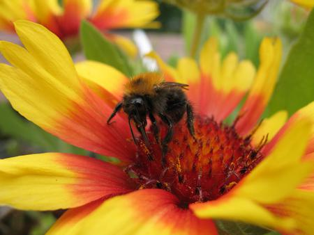 Bee on my flower.