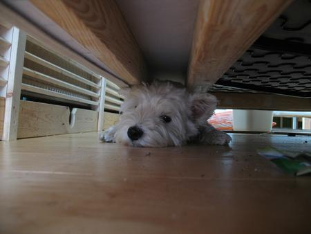 Stuck under the sofa.