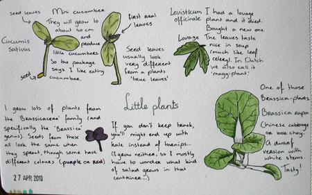 Drawing of plants.