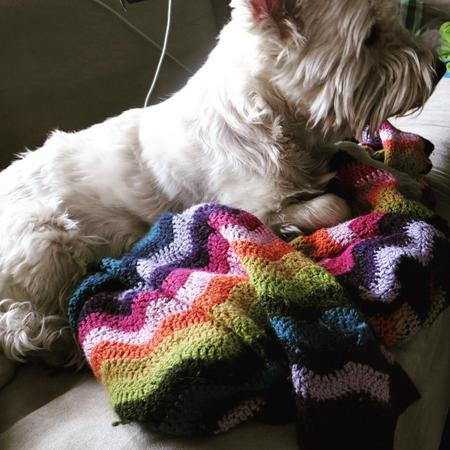 Walk away for a minute, blanket claimed by Nano #day71 #nano #westie #terrier #dog