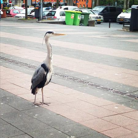 Hello_heron!_#day30