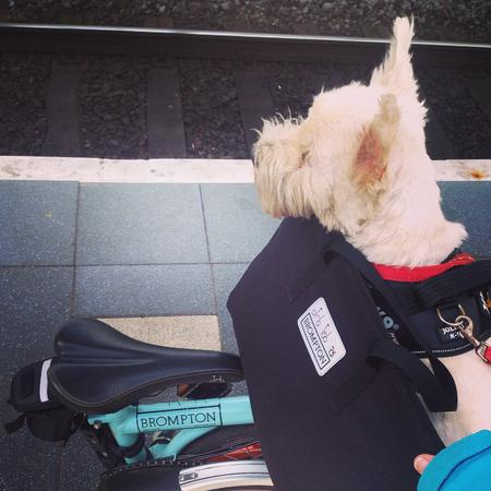 Convenient travel. #day #brompton #nano #westie #terrier #dog